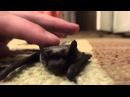 Летучей мыши захотелость нежности