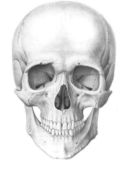 Поэтапны рисунки карандашом череп