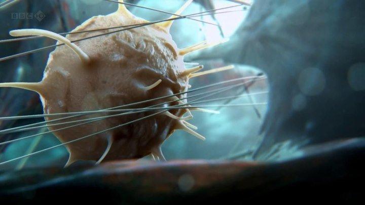 BBC Внутренняя Вселенная Тайная жизнь клетки 2012 Документальный