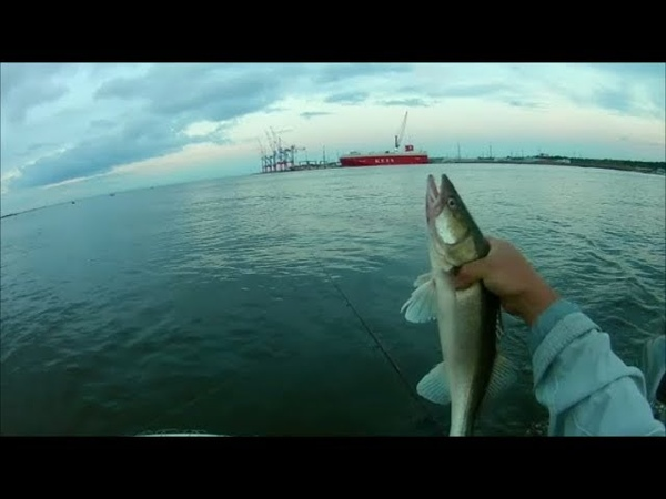 Ловля судака ТРОЛЛИНГОМ .порт Бронка .Фин.залив .