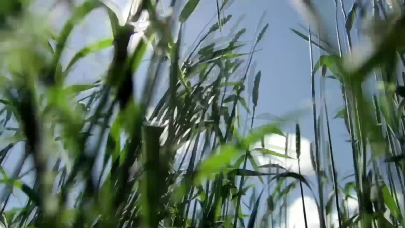 Видеопрофессиограмма Омский ГАУ