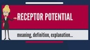 What is RECEPTOR POTENTIAL? What does RECEPTOR POTENTIAL mean? RECEPTOR POTENTIAL meaning