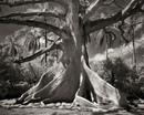 Девушка посвятила 14 лет, фотографируя самые старые деревья планеты.