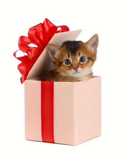 Подарок на 8 марта - котенок