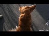 Лайда, собака из Зоо 37