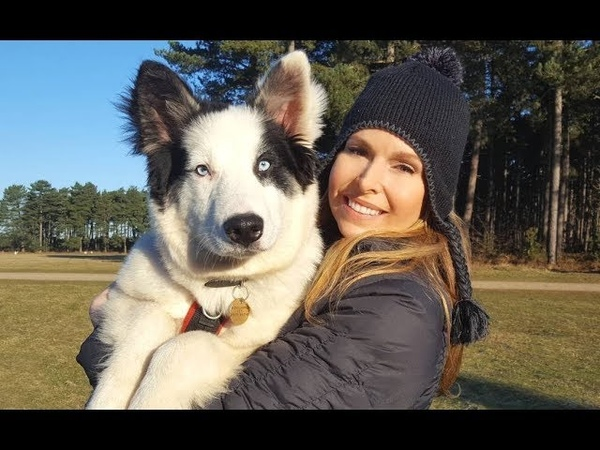 YAKUTIAN LAIKA DOG - RUSSIA'S SUPER SLED DOGS