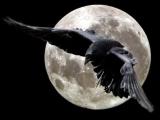 Евгений Дятлов. Черный ворон