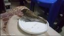 A Story about the Healing of an Injured Sparrow Bird । একটি আহত চড়ুই পাখির সুস্থ হওয়ার 2455