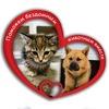 Собачки, кошки, щенята, котята (Типичная Онега)