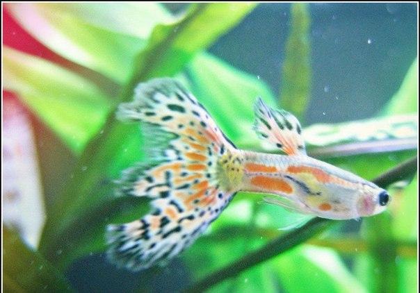 Акваріумні рибки updated the community photo