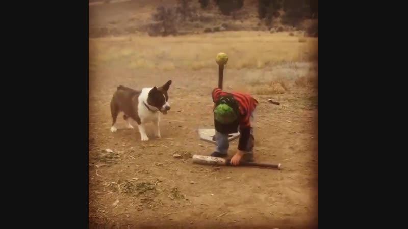 Baseball with the dog