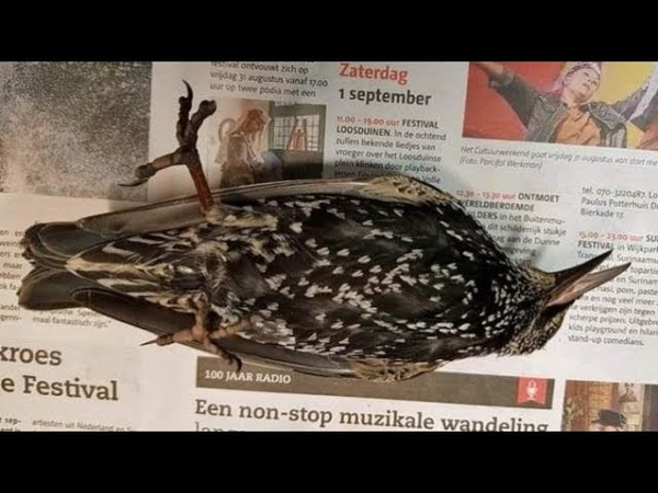Hundreds of Birds Fall From the Sky During 5G Test in The Netherlands - YouTube