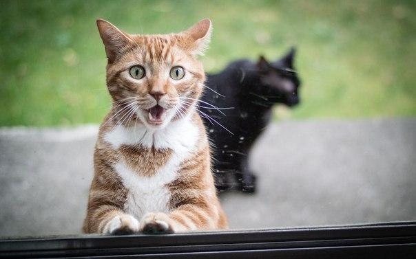 Кот и асматический статус.