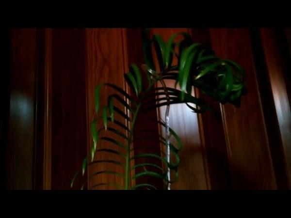 Цикас-4. Саговник/Саговая пальма. Осталась одна вайя. Опора для растений