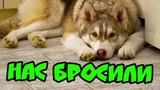 НАС БРОСИЛИ! ЖРЕМ ДОШИРАК И АНАКОМ (Хаски Бублик) Говорящая собака
