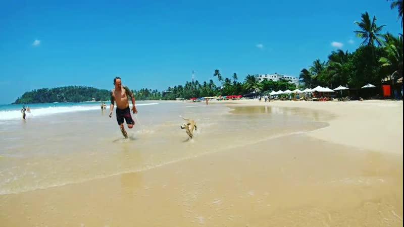 По берегу океана с собакой.