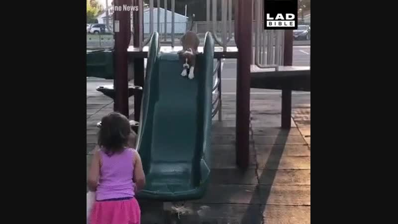 Girl teaches her puppy how to slide.