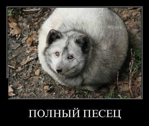 http://cs14101.vk.me/c7008/v7008113/10676/lyrilHAMxrQ.jpg