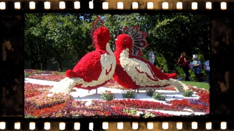 Цветочные скульптуры ! (2)