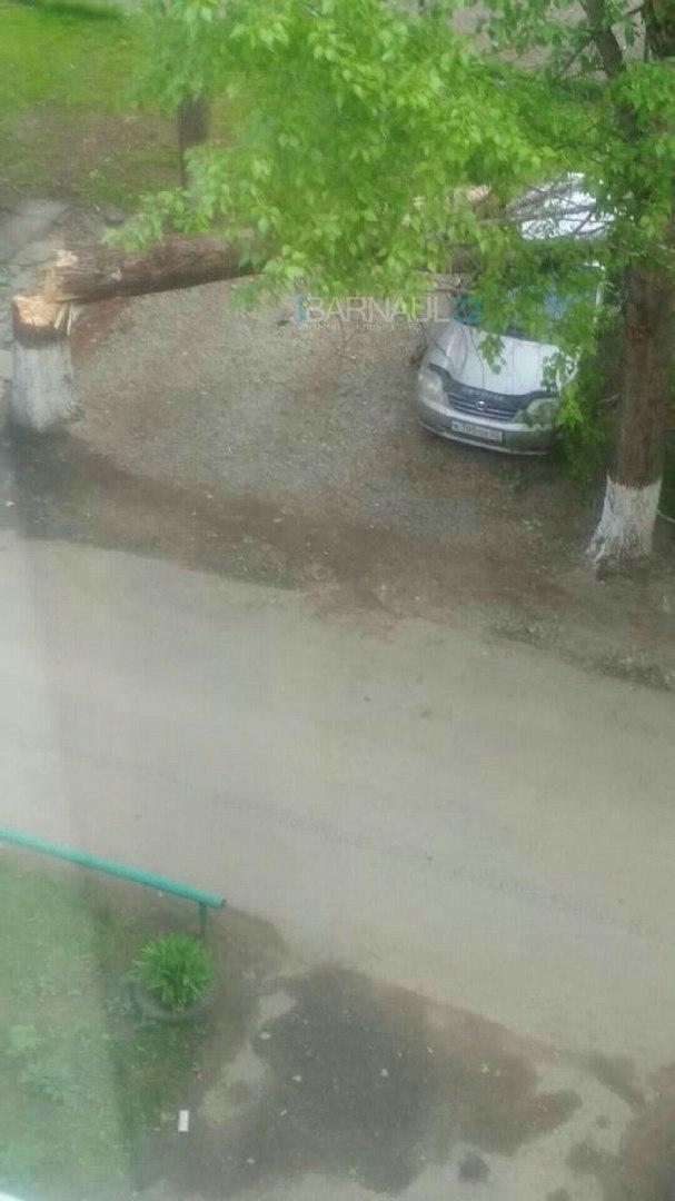 В Сети появились фотографии последствий шторма в Барнауле, сломавшего деревья
