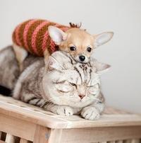 Красивые щеночки и собачки собачки