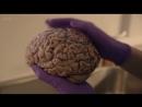 BBC Таинственный мир гормонов Документальный научно популярный 2014 HDTVRip КИНО ФИЛЬМ LIVE