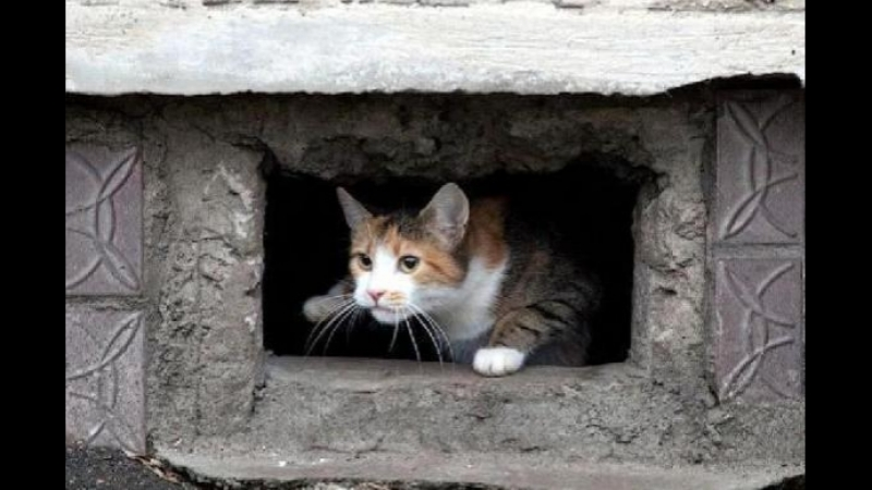 Замуровывать кошек в подвале запретят