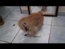 Cast1elShow Кот смотрит на себя в зеркало и срёт Кот обосрался от своего отражения в зеркале