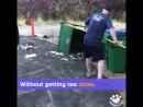 Выгнать медвежат с мусорки!