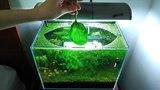 7 Months Update – (Feeding Frenzy) NO filter, NO CO2, NO Ferts 5 Gallon Nano Tank