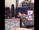 кот срет на кровать