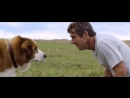 Собачья Жизнь 2017 Драма,Комедия,Приключения,Семейный,Фэнтези Дублированный Трейлер