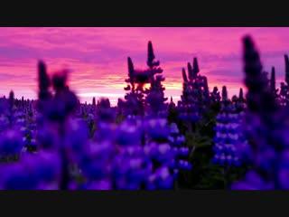 Полуденное солнце Исландии
