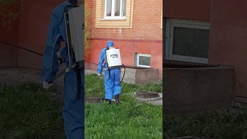 Обработка от блох.Подвальное помещение и прилегающий газон у дома