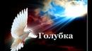 Песня просто класс Премьера 2019 Константин Шевченко - Голубка