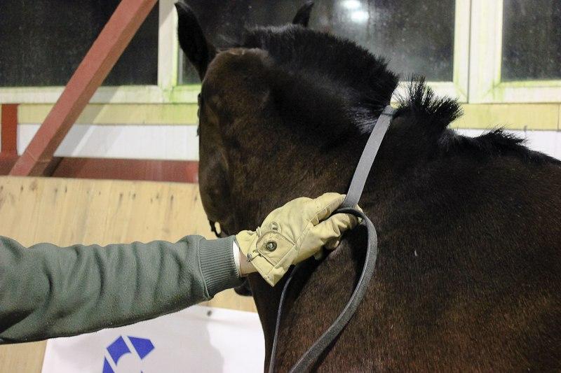 Разбор 2-х поводьев в одну руку, с возможностью управления постановлением лошади  6EuKSzFz5sw