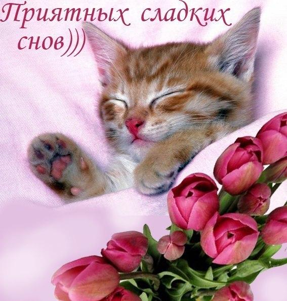 http://cs616921.vk.me/v616921109/75/Ui7AFnOKTDY.jpg