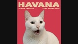 HAVANA - Camila Cabello by CATS Despacito Shape of you + More BEST Hits - Cat Parody