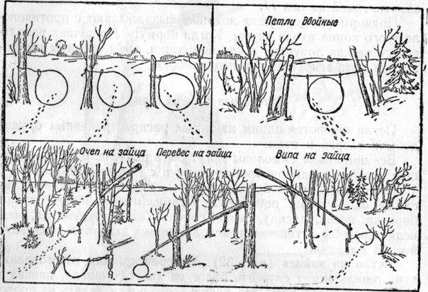 Ловушки для фазана своими руками для зимней охоты