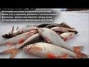 Dry Blooder Сухая кровь топовая рыболовная прикормка Активатор Улова