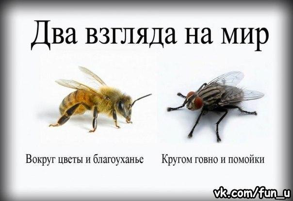 http://cs410316.vk.me/v410316786/697d/9U0aVuJNgYM.jpg