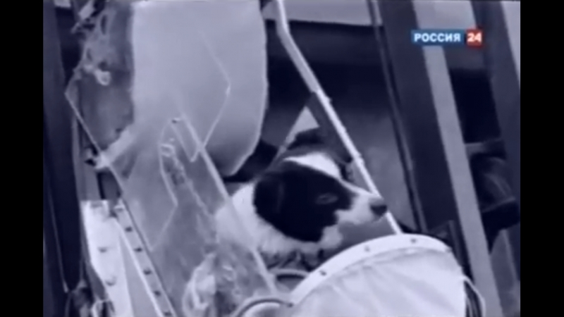 Первые собаки в космосе