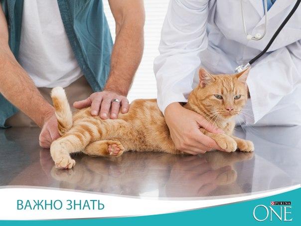 Cat insurance plans