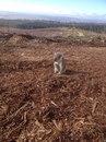 Коала вернулась к месту своего дома, но не нашла его. Рабочий заметил коалу…