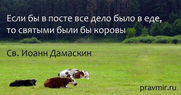 http://cs543108.vk.me/v543108701/17caa/9WlI_Y7vQVo.jpg
