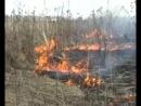 Огонь не прощает ошибок берегите природу