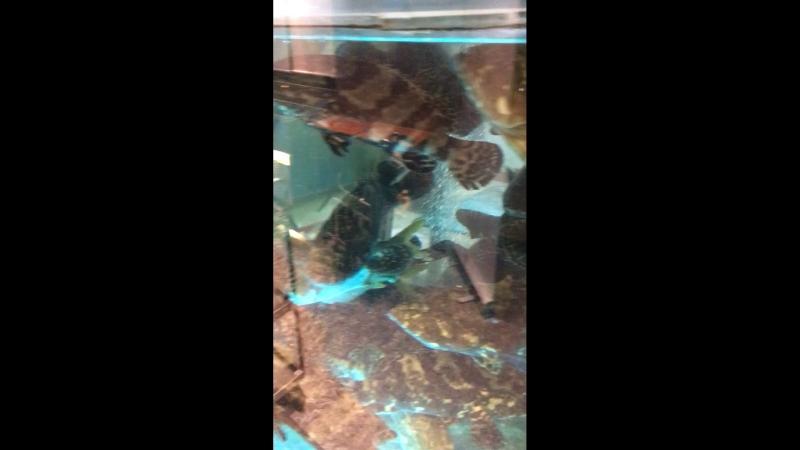 Рыбины в аквариуме