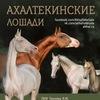 Ахалтекинские лошади  Продажа лошадей