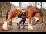 Cute And funny horse Videos Compilation cute moment of the horses - Baby animals #19