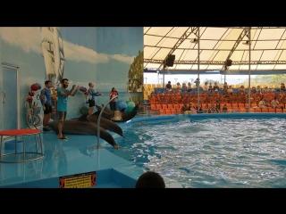 Дельфин-Шоу часть финал(они самые)о.Пхукет,Тайланд апрель 2018 » Freewka.com - Смотреть онлайн в хорощем качестве